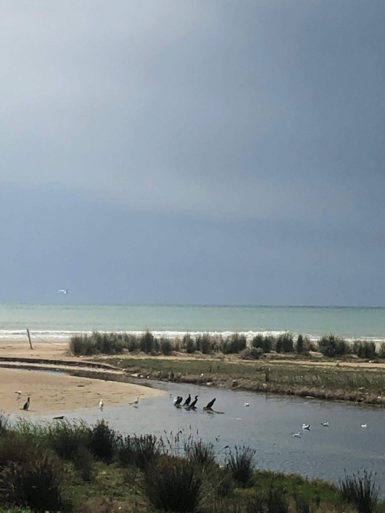Playa de Vilanova, vida salvaje, fauna, aves